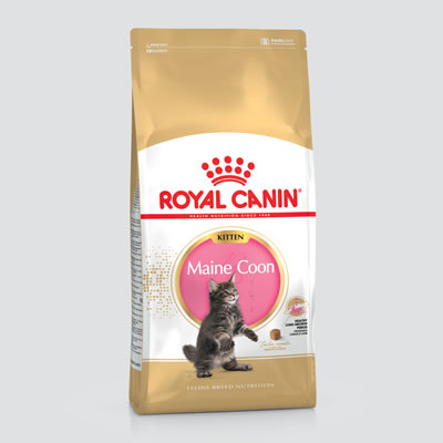 Royal Canin - Maine Coon - Kitten